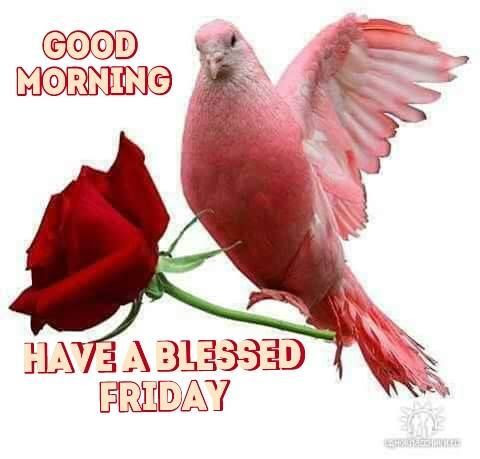Good Morning Have A Blessed Friday Pictures Photos And Images For