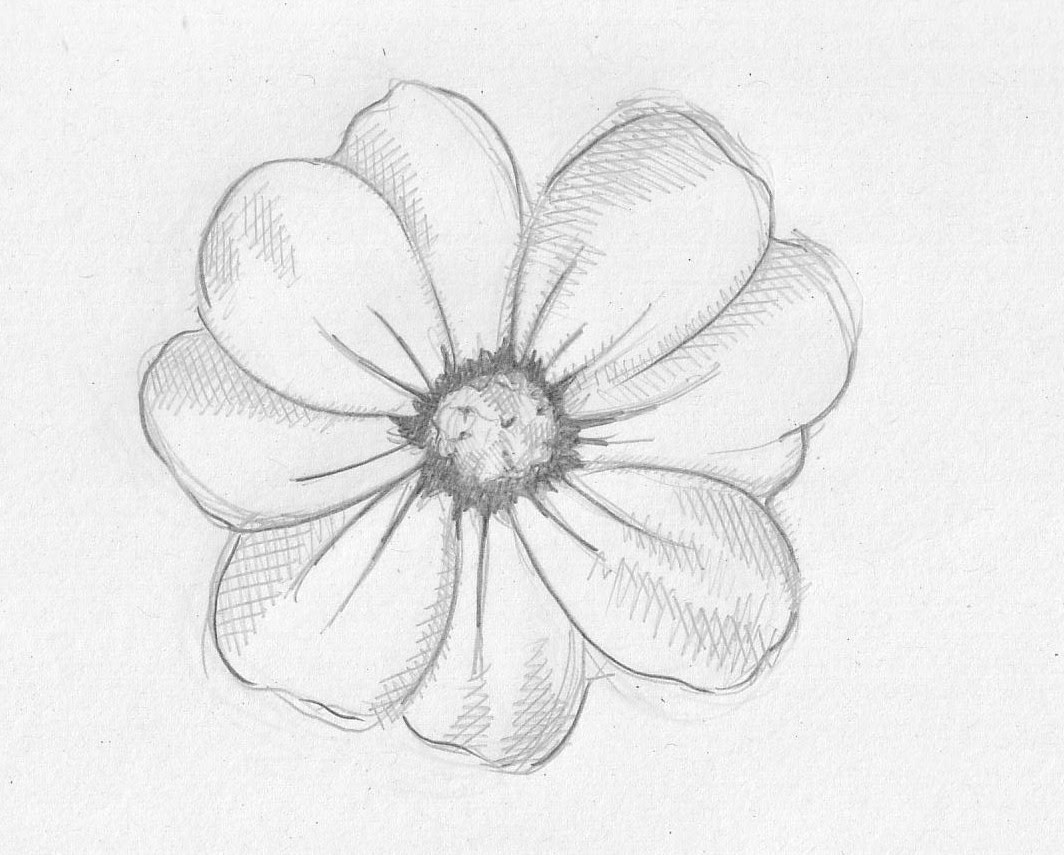 Easy Pencil Sketch Drawing Flowers Hexopict Wall Ideas Chandra art 180.875 views9 months ago. easy pencil sketch drawing flowers