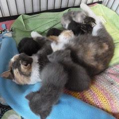 Kitty Q & Babies