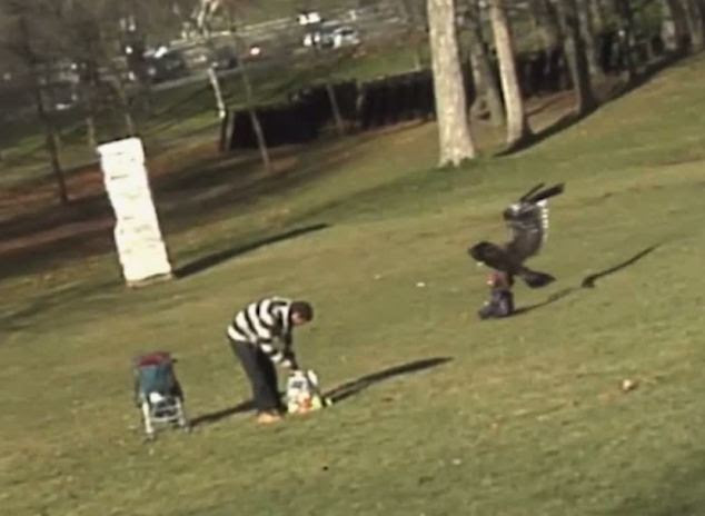 This is the moment the giant eagle grabs the child by his winter coat as he sits on the grass in a park