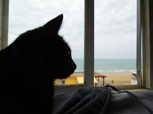 """Il gatto """"Bibi"""" dalla finestra al mare by Ylbert Durishti"""