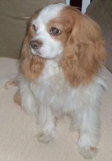 Ruby [November 2009]