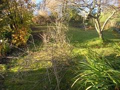 sommer, høst, 2008 095