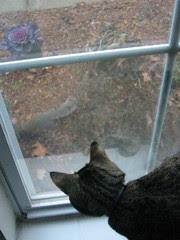 Maggie on squirrel patrol