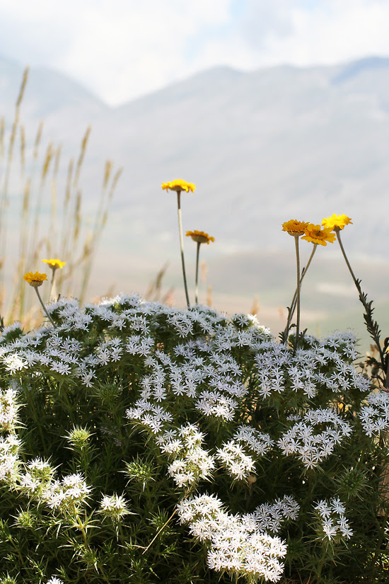 fioritura 1