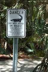 Don't Molest the Alligators!
