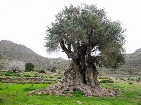 τα-ομορφότερα-δέντρα-του-κόσμου