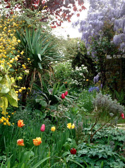 Lilac-tulip-garden