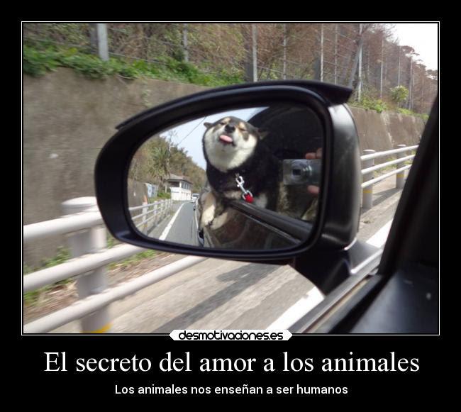 El Secreto Del Amor A Los Animales Desmotivaciones