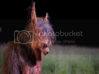 photo late-phases-werewolf-e1416708077326-1024x611_zpsdbxkqzvr.jpg