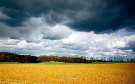 yellow field storm clouds tree wallpapers yellow field