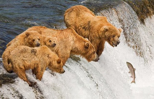 animal pictures of the week bears