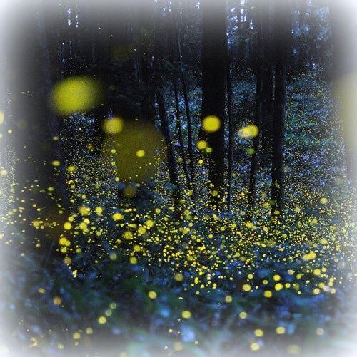 photo Fireflies_zpsfd14dcc7.jpg