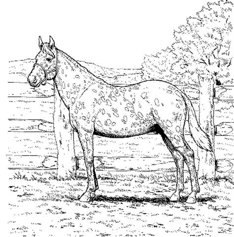 fun horse coloring pages   kids printable