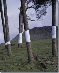 Tree, Line