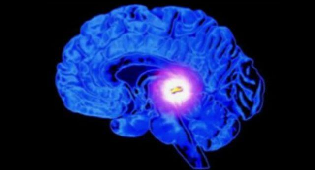 Notre cerveau, le programme d'un «ordinateur quantique»?