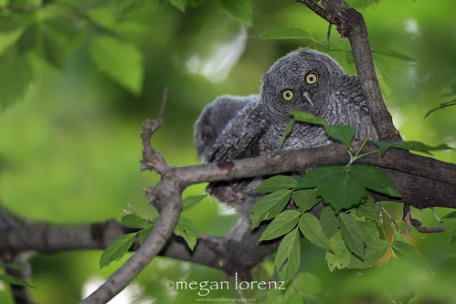 When I heard the news....I think I had the same expression! by Megan Lorenz