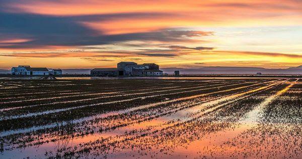 Resultado de imagen de arrozales albufera
