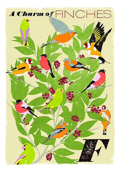 Alphabet : F is for Finches