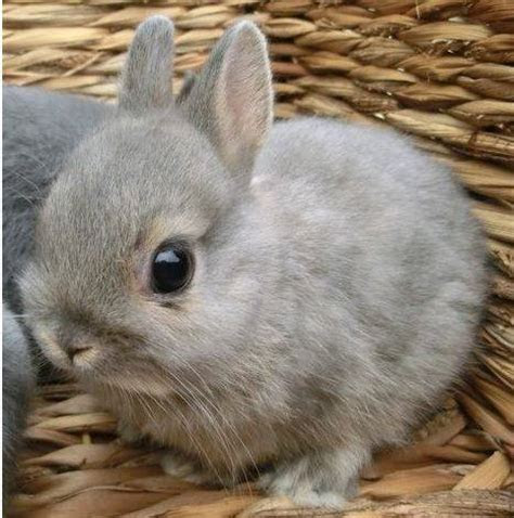Extremely Cute Bunny Rabbit   LuvBat