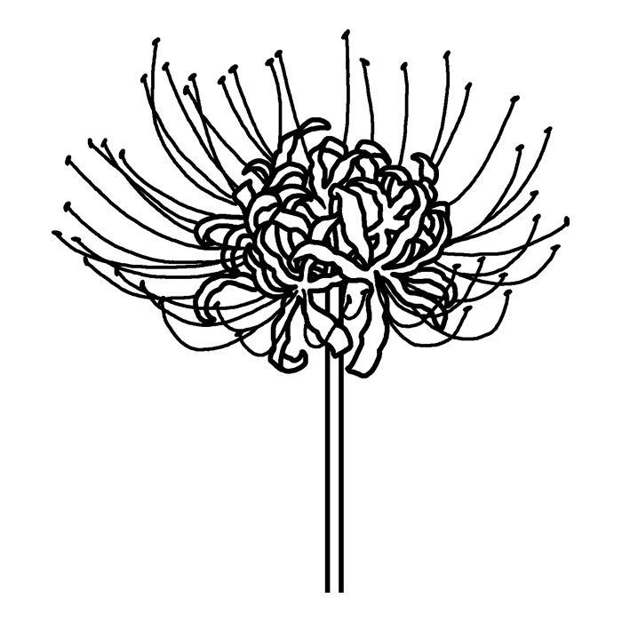 ヒガンバナ彼岸花白黒秋の花無料イラスト素材