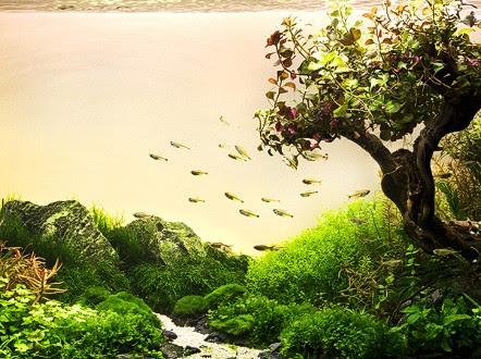 Aquascape Ideas Fish Tank Aquascape