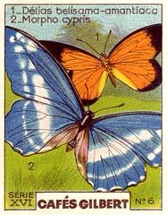 gilbertpapillons007