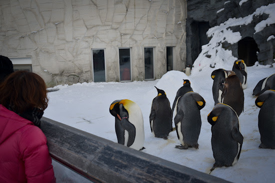 20130223-DSC_2135-penguin_zoo
