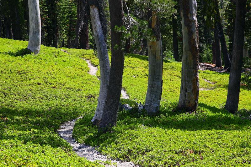 IMG_1140 Sifford Lake Trail