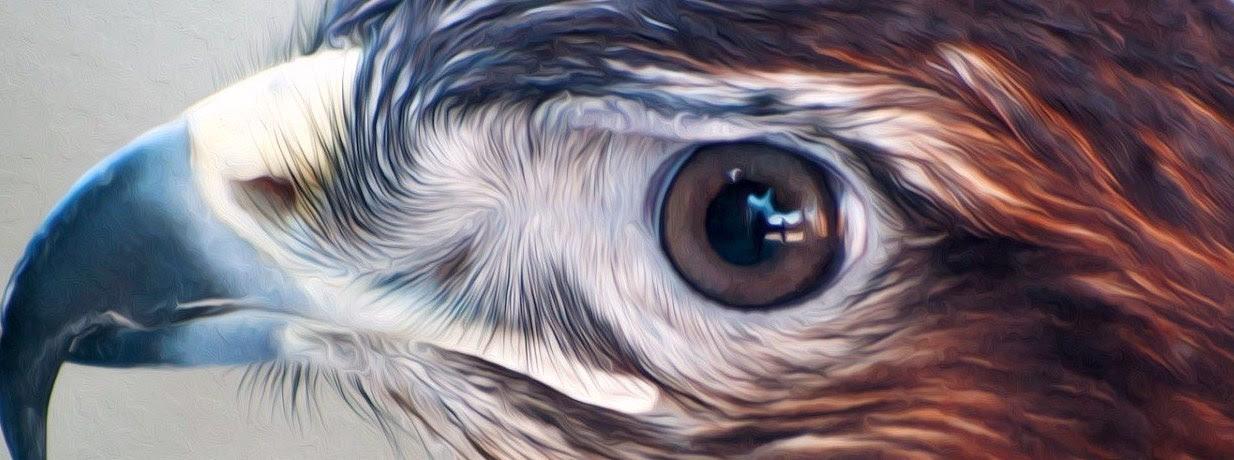 falcon-bird