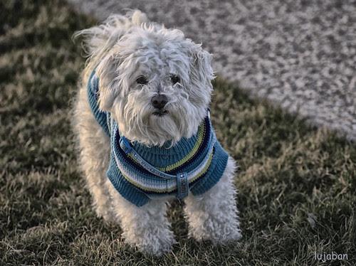 Doggy by lujaban