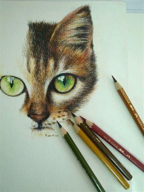 pencil art cat drawing colored art pinterest
