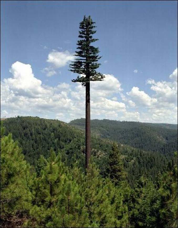 Νομίζετε πως πρόκειται για ένα δένδρο; Κοιτάξτε πιο προσεκτικά... (2)