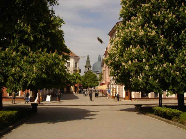 Chestnuts Blossom in Ternopil city, West Ukraine