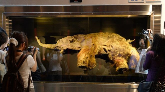 People taking photos of the body of a 39,000-year-old woolly mammoth on display
