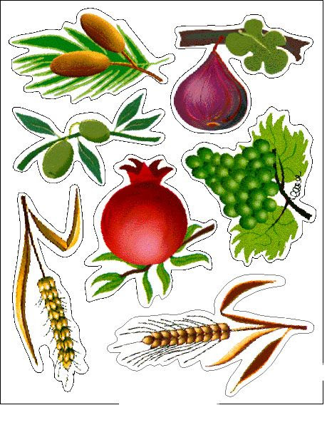 The 7 Species:  date, fig, olive, pomegranate, grape, barley, wheat  -  שבעת המינים