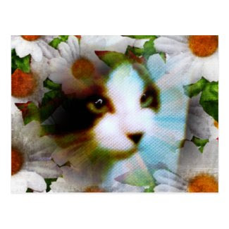 snowshoe canvass kitty surrounded by daisies postcard