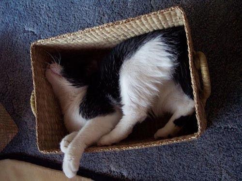 Οι πιο παράξενες στάσεις ύπνου για γάτες (22)