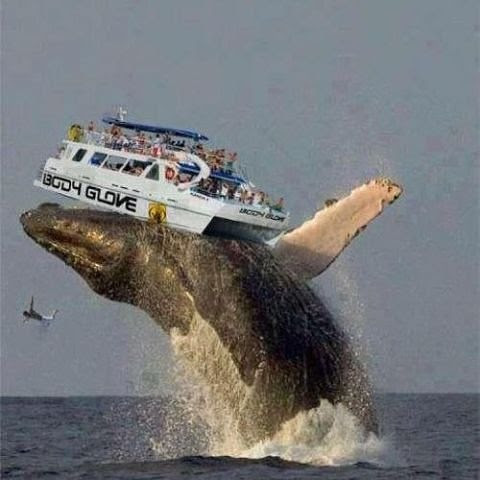 куриози, кит вдига корабче във въздуха