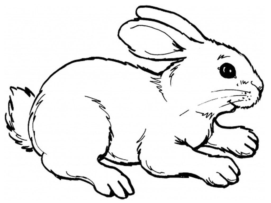 Dibujos De Conejos Imágenes Y Fotos