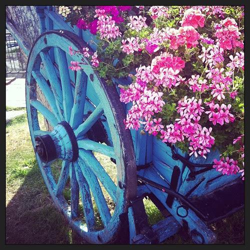 Flowers and colors:) Fiori e colori:)