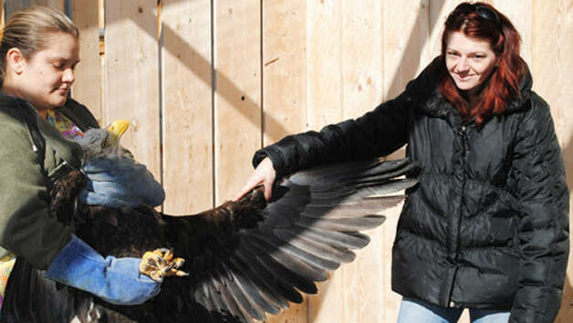 http://www.seattlepi.com/local/article/WSU-saves-bald-eagle-from-lead-poisoning-3406640.php#next