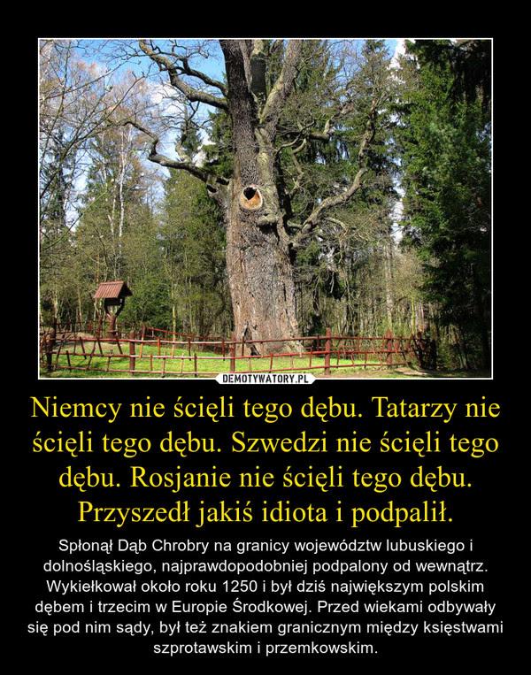 Niemcy nie ścięli tego dębu. Tatarzy nie ścięli tego dębu. Szwedzi nie ścięli tego dębu. Rosjanie nie ścięli tego dębu. Przyszedł jakiś idiota i podpalił. – Spłonął Dąb Chrobry na granicy województw lubuskiego i dolnośląskiego, najprawdopodobniej podpalony od wewnątrz. Wykiełkował około roku 1250 i był dziś największym polskim dębem i trzecim w Europie Środkowej. Przed wiekami odbywały się pod nim sądy, był też znakiem granicznym między księstwami szprotawskim i przemkowskim.