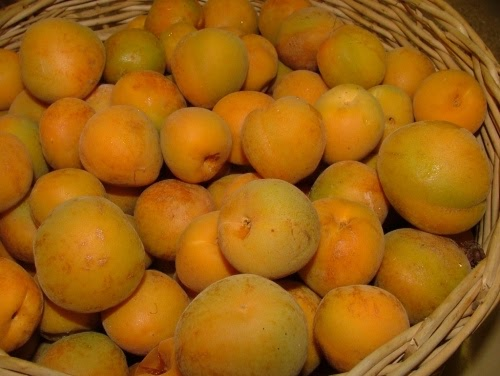 Fresh Apricot Cake German Cake Recipe