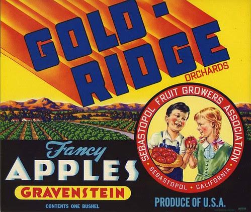 gold ridge label_tatteredandlost