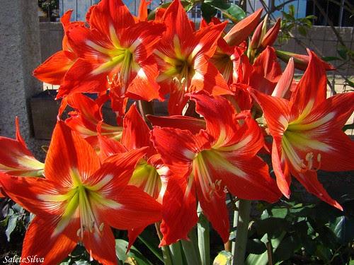 Um bela quinta flor com Açucenas!!!