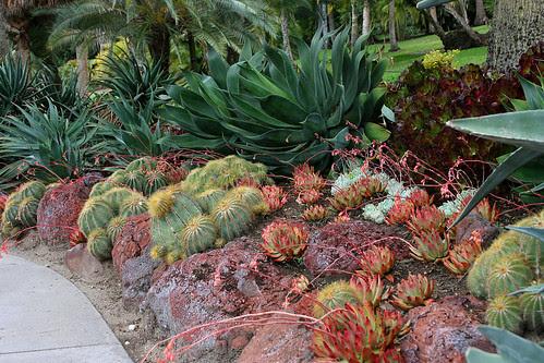 huntington succulent textures 2