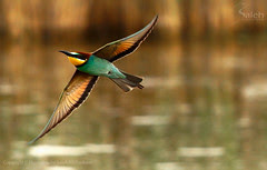 BeE EateR ||