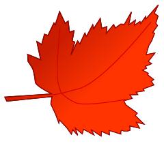 leaf fall red