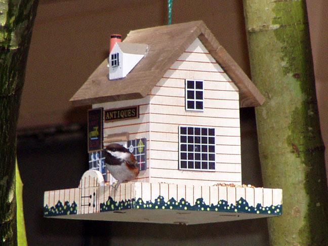 Chestnut-backed Chickadee